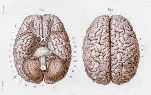 Beyniniz hakkında ne kadar şey biliyorsunuz?
