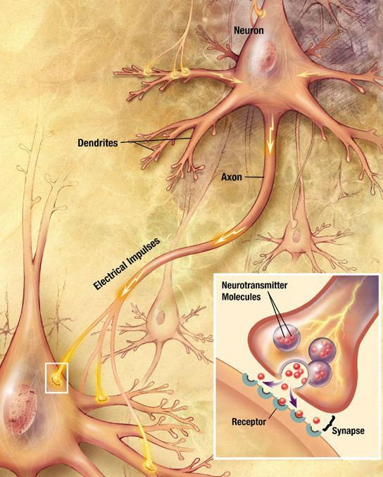 nöron-nedir