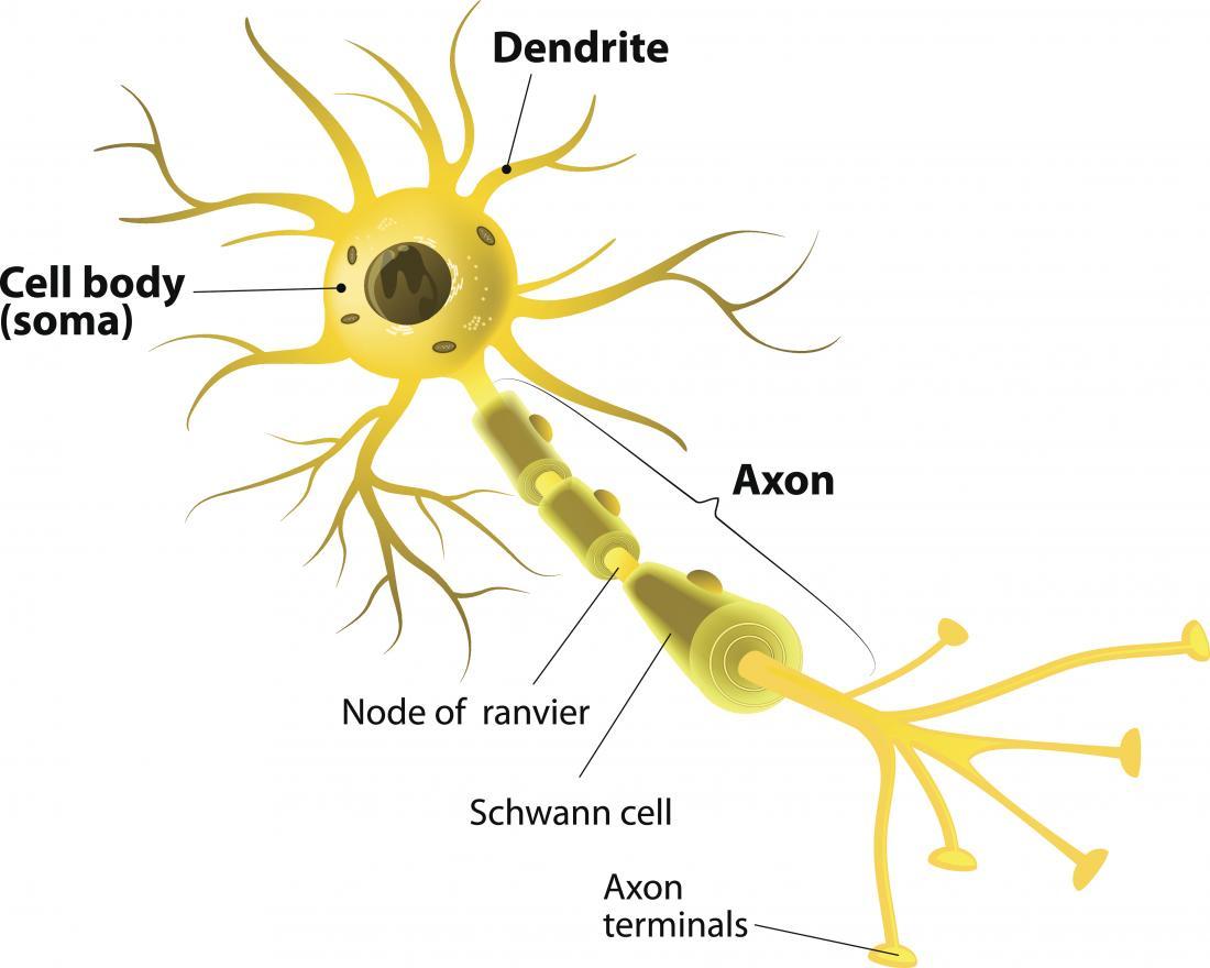 nöronların-özellikleri-nelerdir